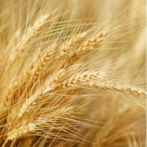 area terreni e agricoltura notaio colangeli